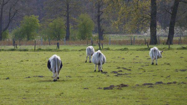 Western Horse Academy Walsrode