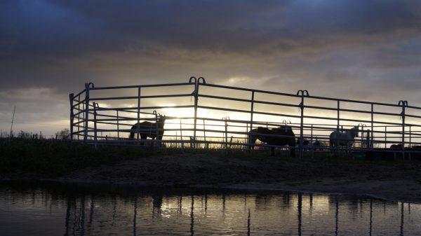 Banti-Cow Ranch